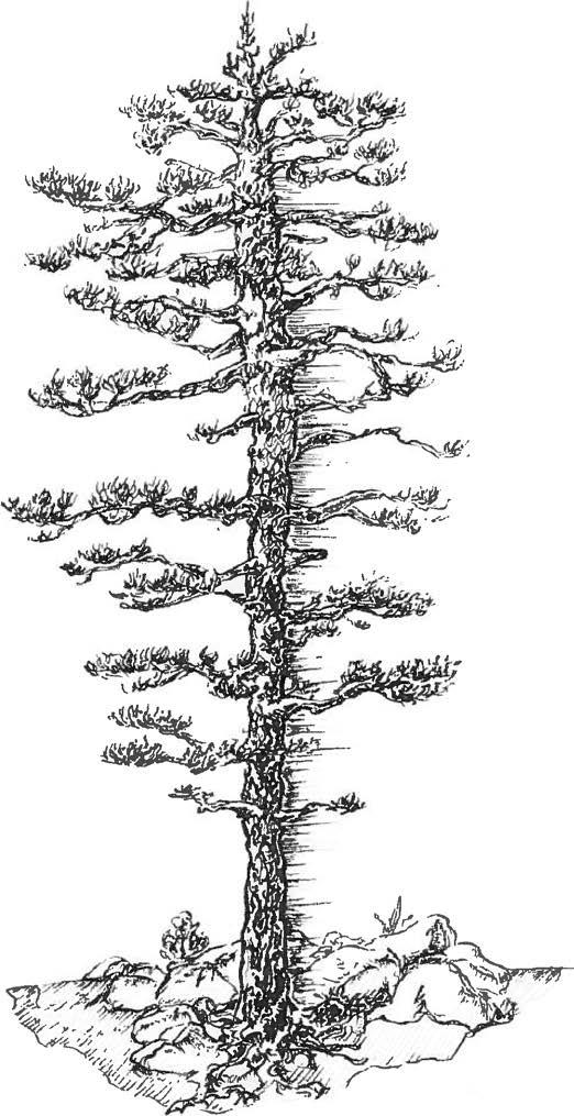 feb2014_tree